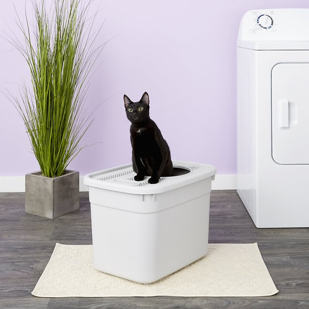 Clevercat Top Entry Litterbox Chewy Com