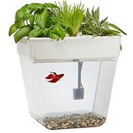 Back to the Roots Water Garden Fish Tank, 3-gallon