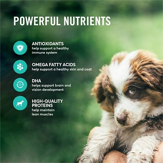 American Journey Lamb Sweet Potato Recipe Grain Free Puppy Dry Dog