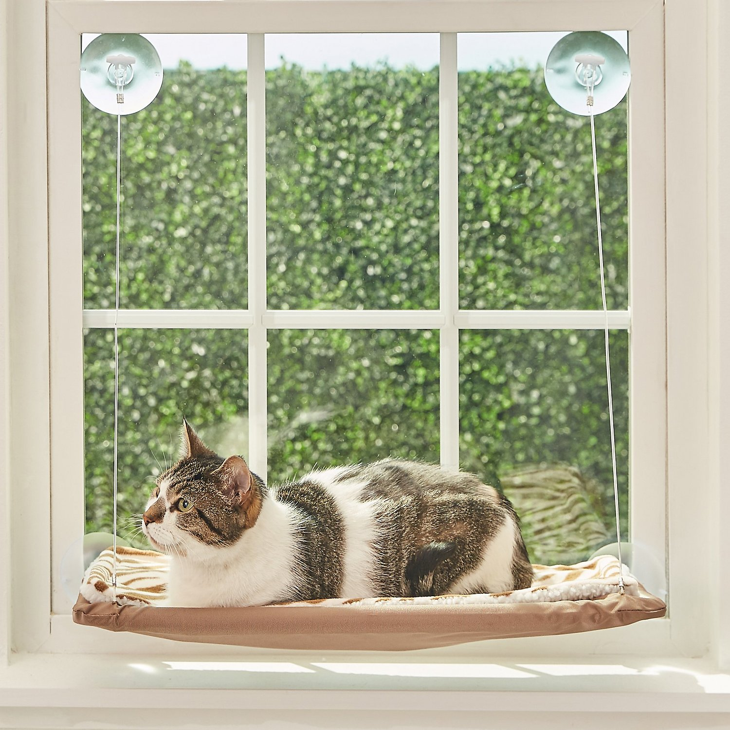 Fantastic Oster Sunny Seat Window Mounted Cat Bed Brown Andrewgaddart Wooden Chair Designs For Living Room Andrewgaddartcom