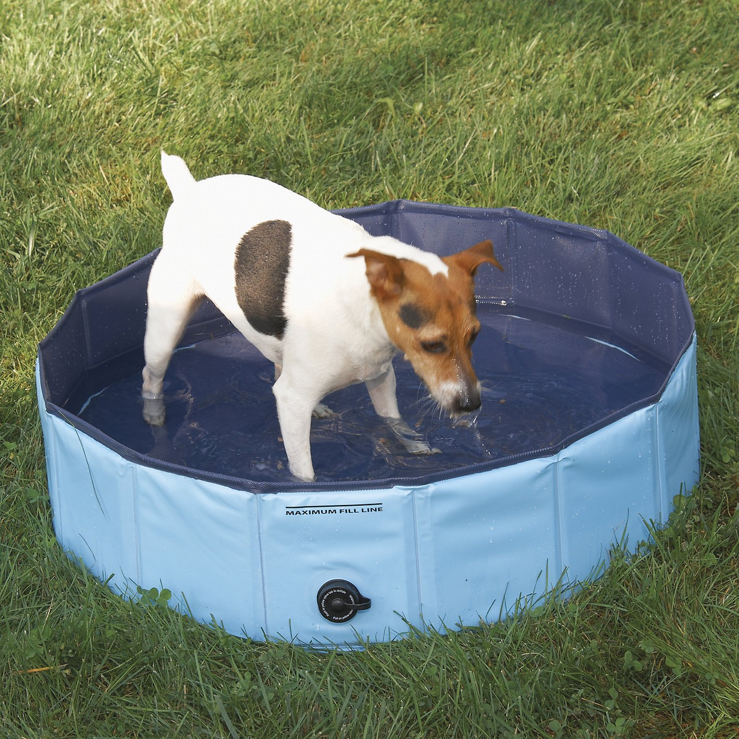 Cool Pup Splash About Dog Pool Small Blue Chewy Com