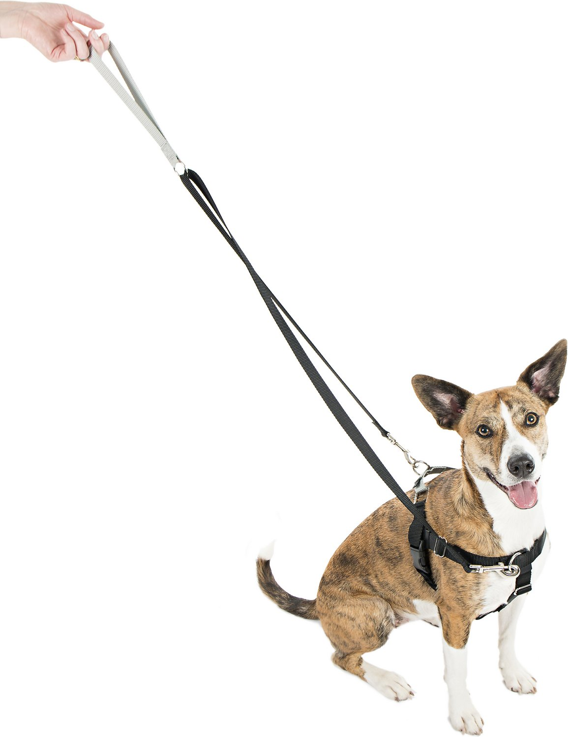 2 Hounds Design Freedom No Pull Dog Harness and Leash, 5/8 ...