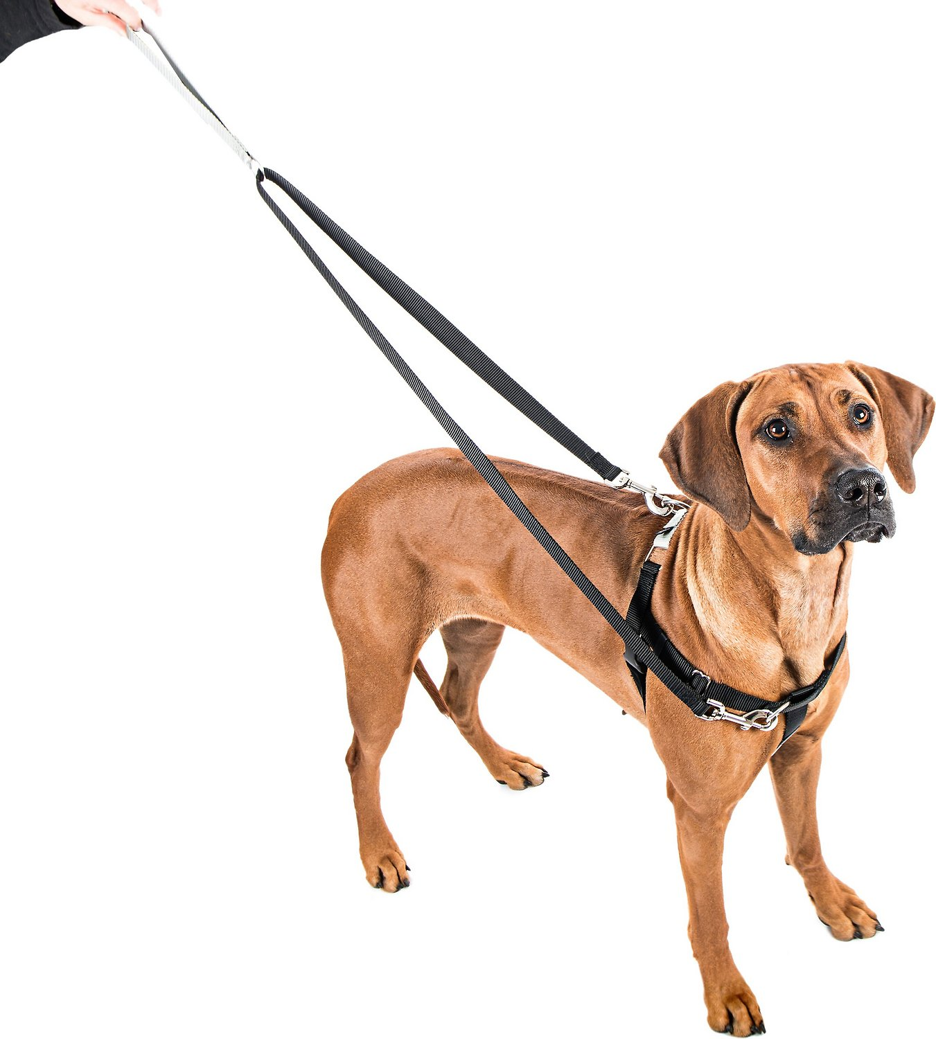 2 Hounds Design Freedom No Pull Dog Harness and Leash, 1 ...