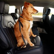 Mighty Paw Dog Vehicle Safety Belt, Black/Orange