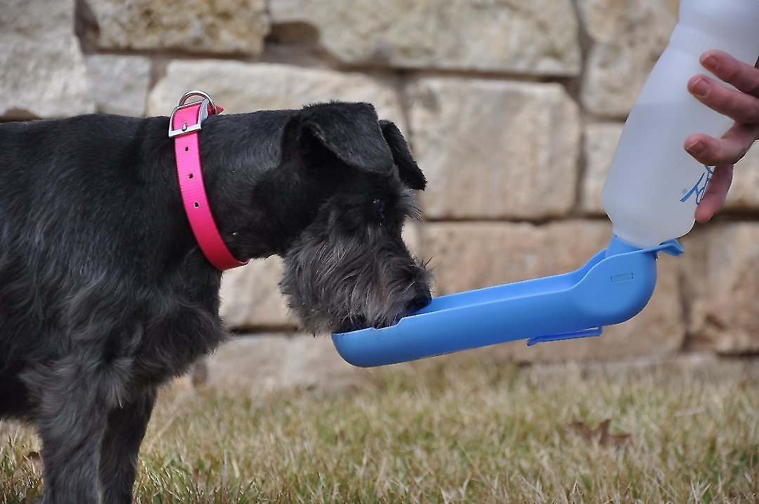 Gulpy H2o To Go Portable Pet Water Dispenser Color Varies