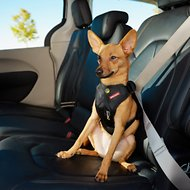 EzyDog Drive Dog Car Harness, Small