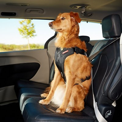 Image result for dog car harness