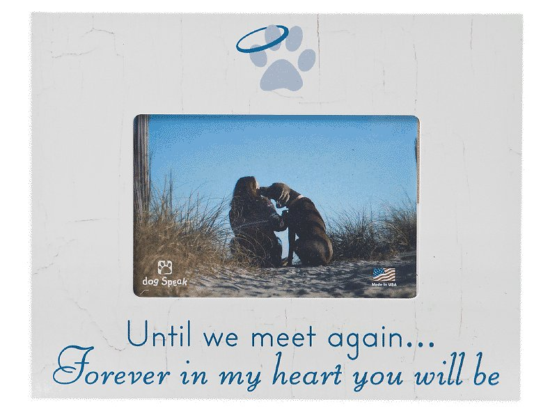 Picture Frames - Free shipping at Chewy.com
