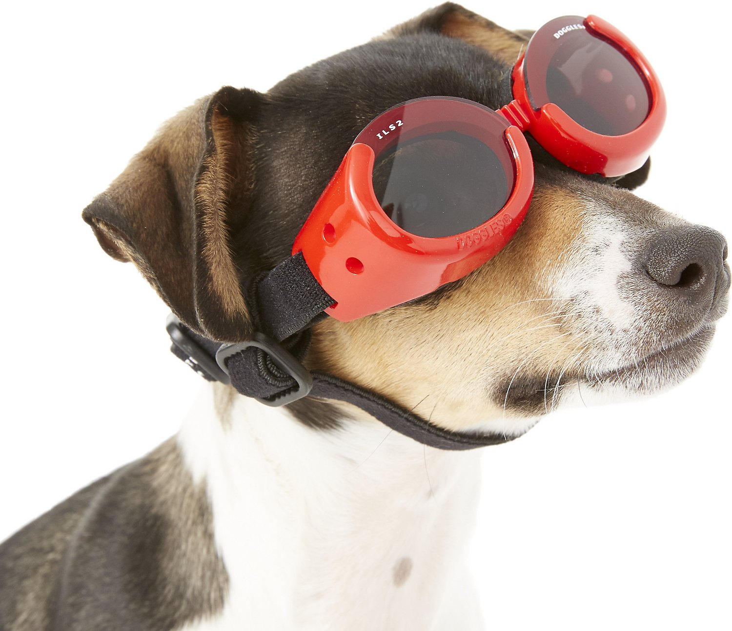 Doggles ILS Dog Goggles, Red, X-Small - Chewy.com