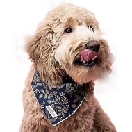 Lucy & Co. Dog Bandana, Small, The Ollie