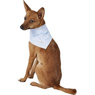 Lucy & Co. Dog & Cat Bandana, Small, The Sage