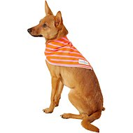 Lucy & Co. Dog Bandana, Small, The Jasper