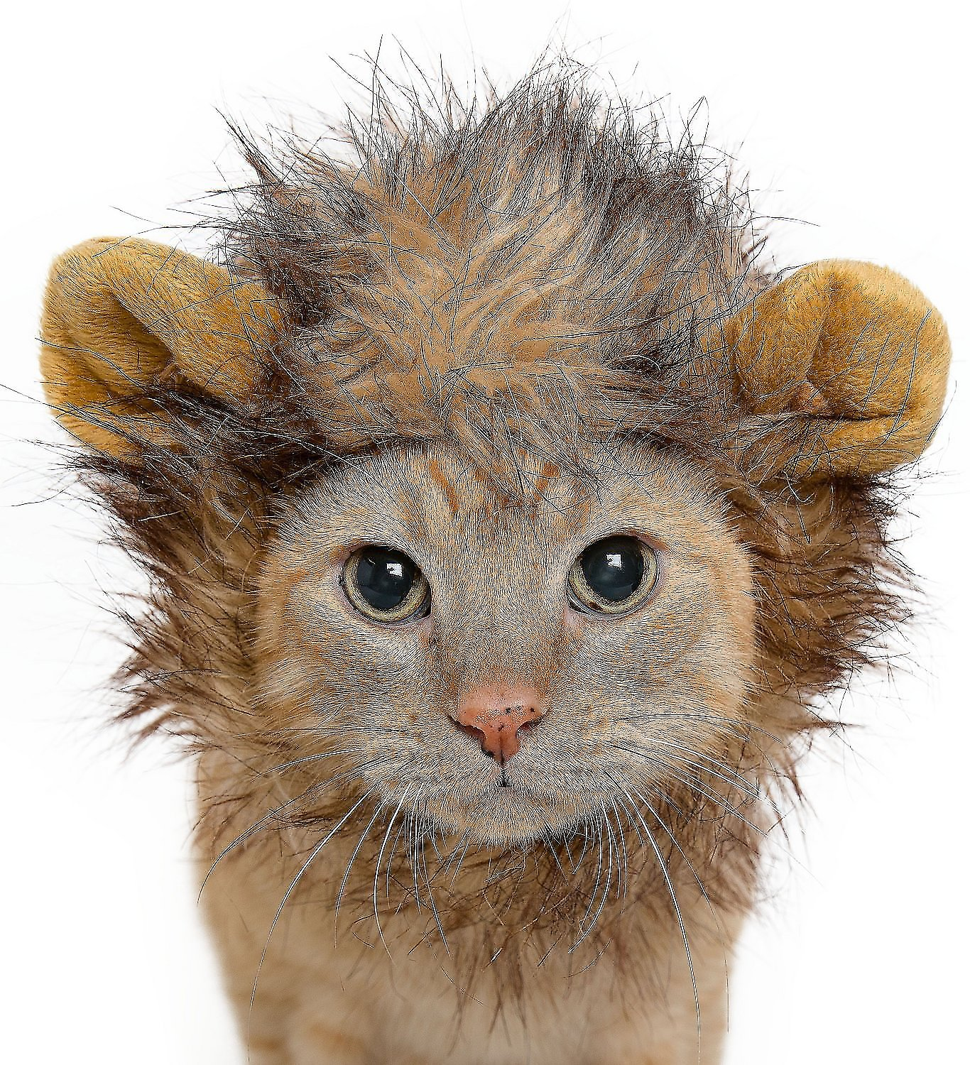 12722dfaba721 Pet Krewe Lion Mane Cat & Small Dog Costume - Chewy.com