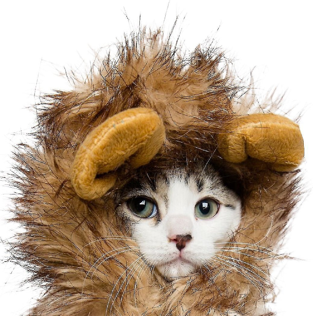 Pet Krewe Lion Mane Cat Amp Small Dog Costume Chewy Com