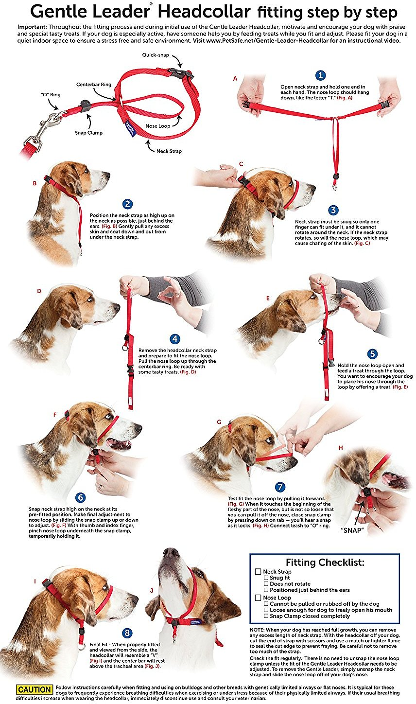 gentle lead collar instructions
