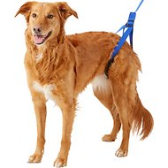 HandicappedPets Rear Support Dog Leash