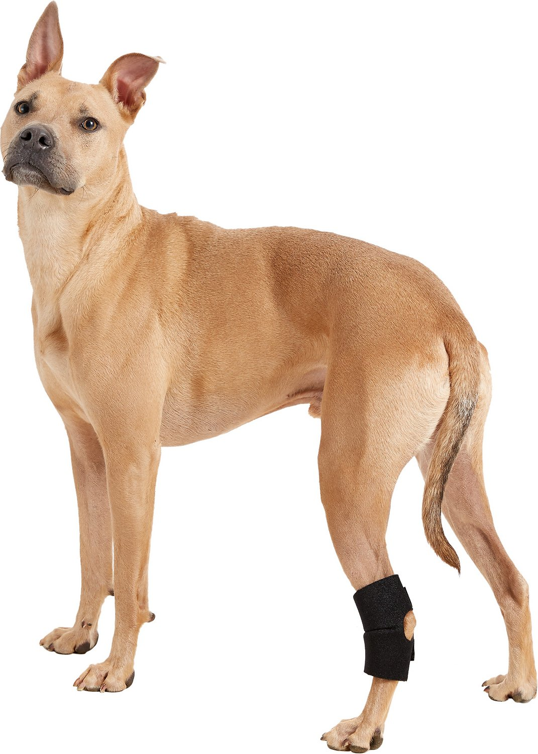 Handicappedpets Rear Leg Dog Hock Wrap Large Chewy Com