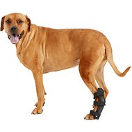 HandicappedPets Hock Style Rear Leg Dog Splint, Medium