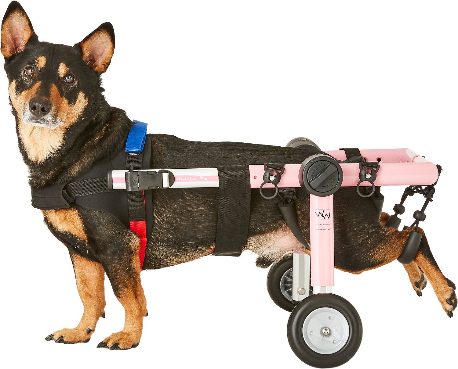HandicappedPets Medium Dog Wheelchair ...