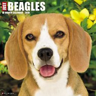 Just Beagles 2018 Wall Calendar