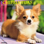Just Chihuahuas 2018 Wall Calendar