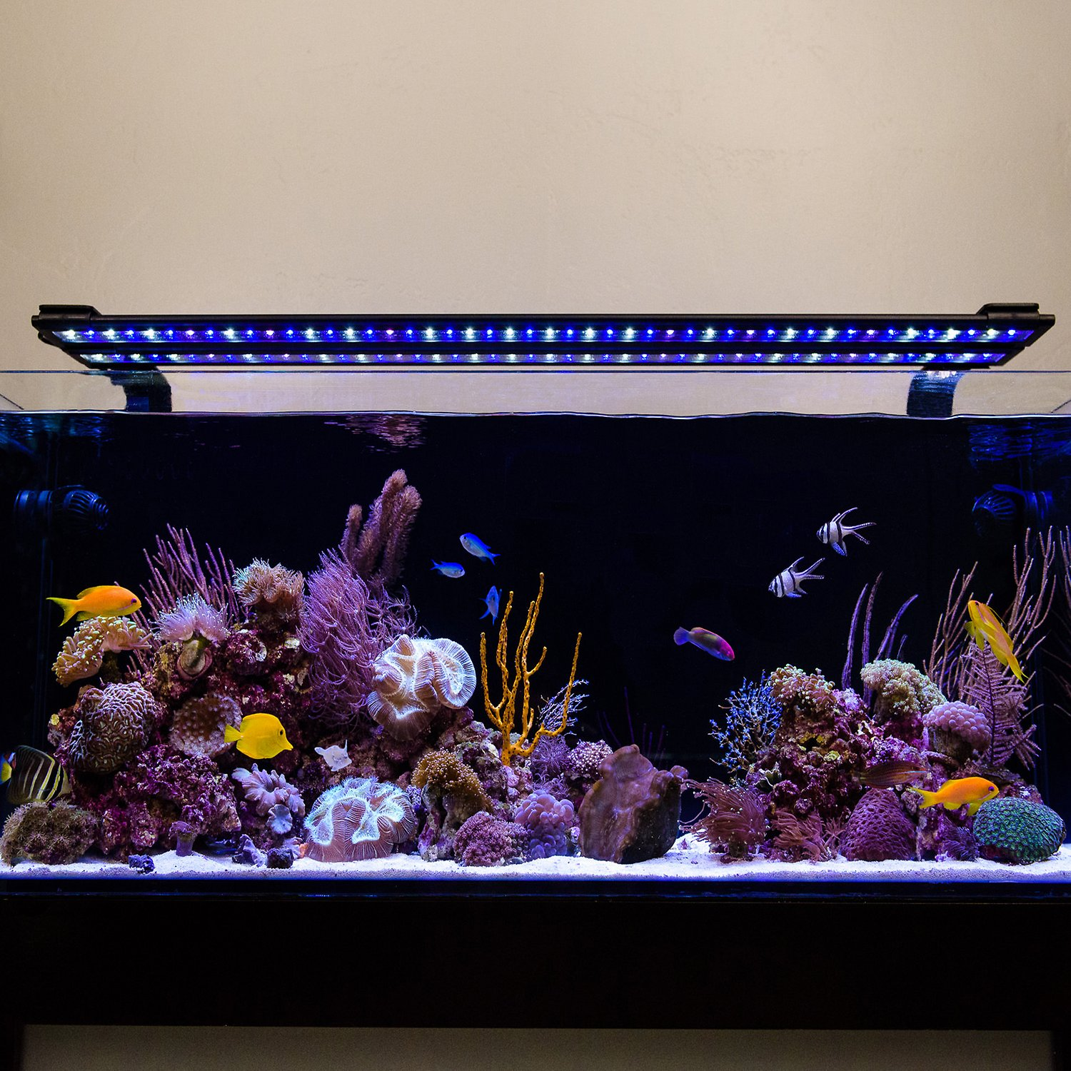 Current Usa Orbit Marine Ic Led Reef Aquarium Lighting