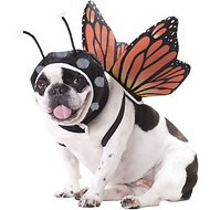California Costumes Monarch Butterfly Dog Costume, XSmall
