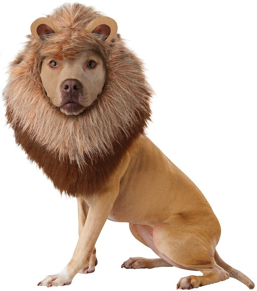 video  sc 1 st  Chewy.com & California Costumes Lion Mane Dog Costume XSmall - Chewy.com