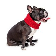 Fab Dog Infinity Dog & Cat Scarf, Red, X-Small/Small