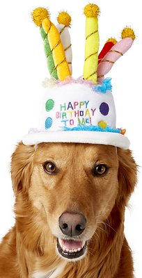 Rubies Costume Company Birthday Cake Dog Cat Hat
