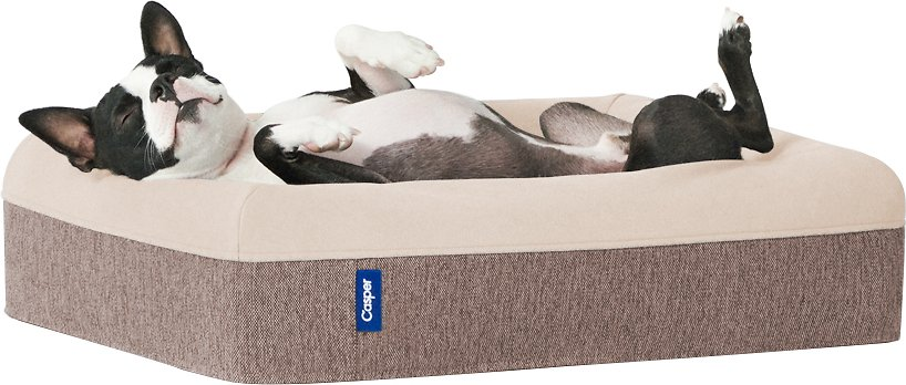 Casper Memory Foam Dog Bed, Small, Taupe - Chewy.com