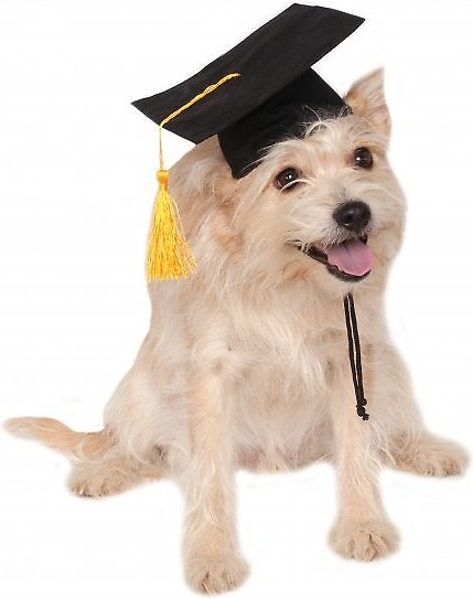 video  sc 1 st  Chewy.com & Rubieu0027s Costume Company Graduation Hat Dog u0026 Cat Costume Small ...