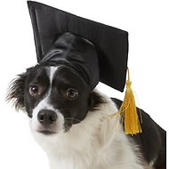 Rubie's Costume Company Graduation Hat Dog & Cat Costume, Medium/Large