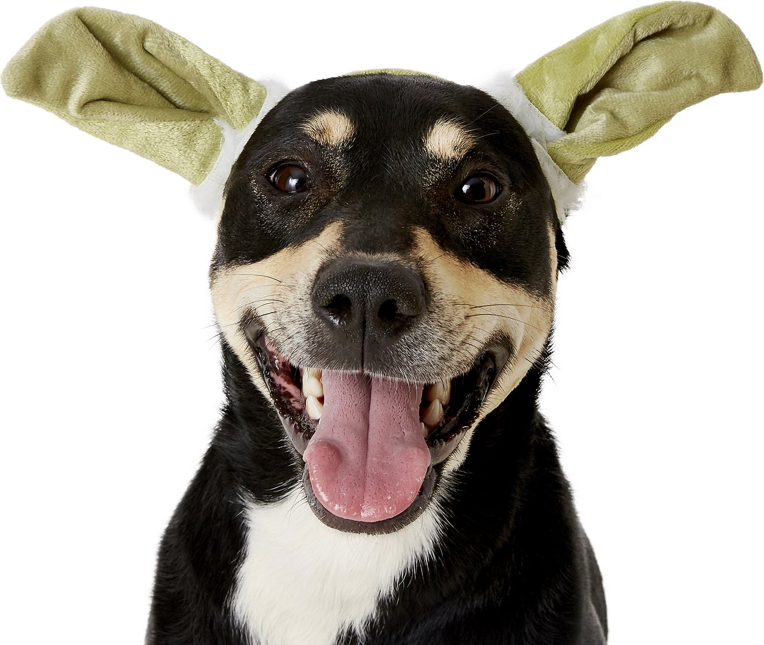 video  sc 1 st  Chewy.com & Rubieu0027s Costume Company Yoda Ears Dog Costume Medium/Large - Chewy.com