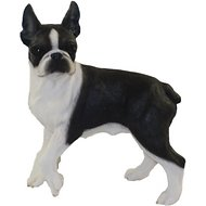 Conversation Concepts Boston Terrier Figurine