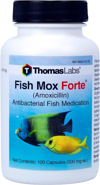 Thomas labs fish mox forte amoxicillin antibacterial fish for What is fish mox