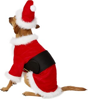 Rubie S Costume Company Santa Claus Dog Costume Small Chewy Com
