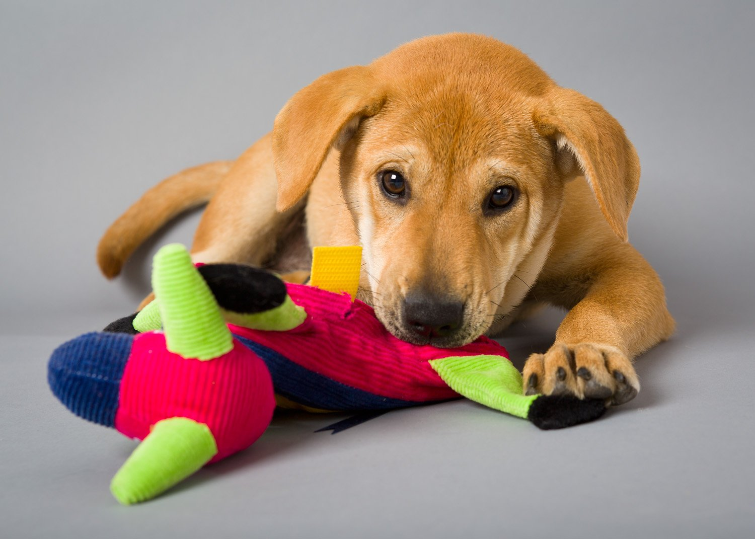 Pet Toys For Less