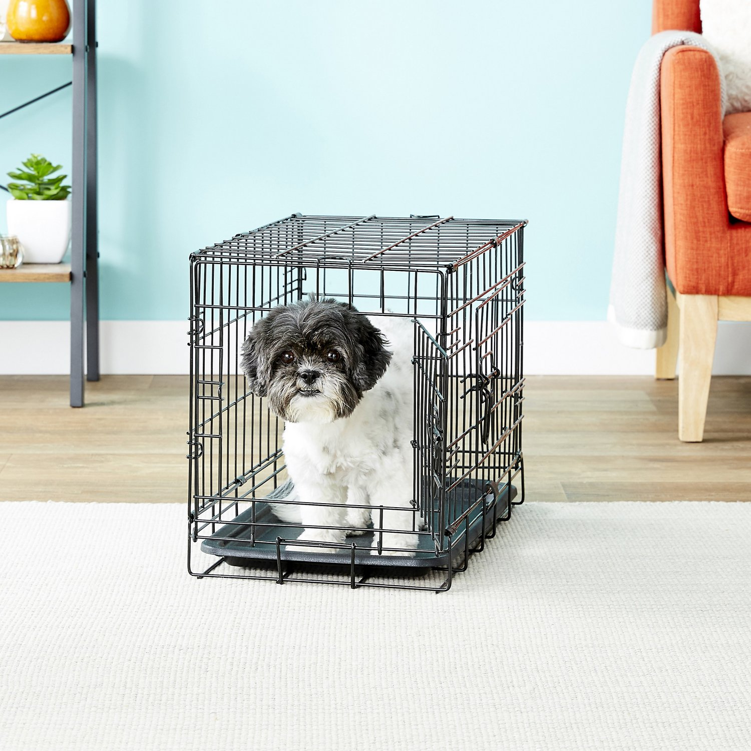 Paws & Pals Single-Door Folding Wire Dog Crate, 20-in - Chewy.com