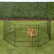 Paws & Pals Collapsible Wire Exercise Pen, 24-in