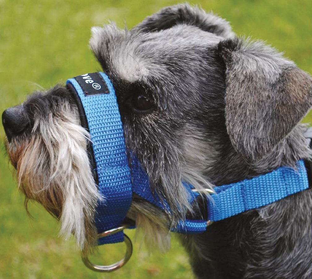 Dogs My Love Halter Dog Head Collar