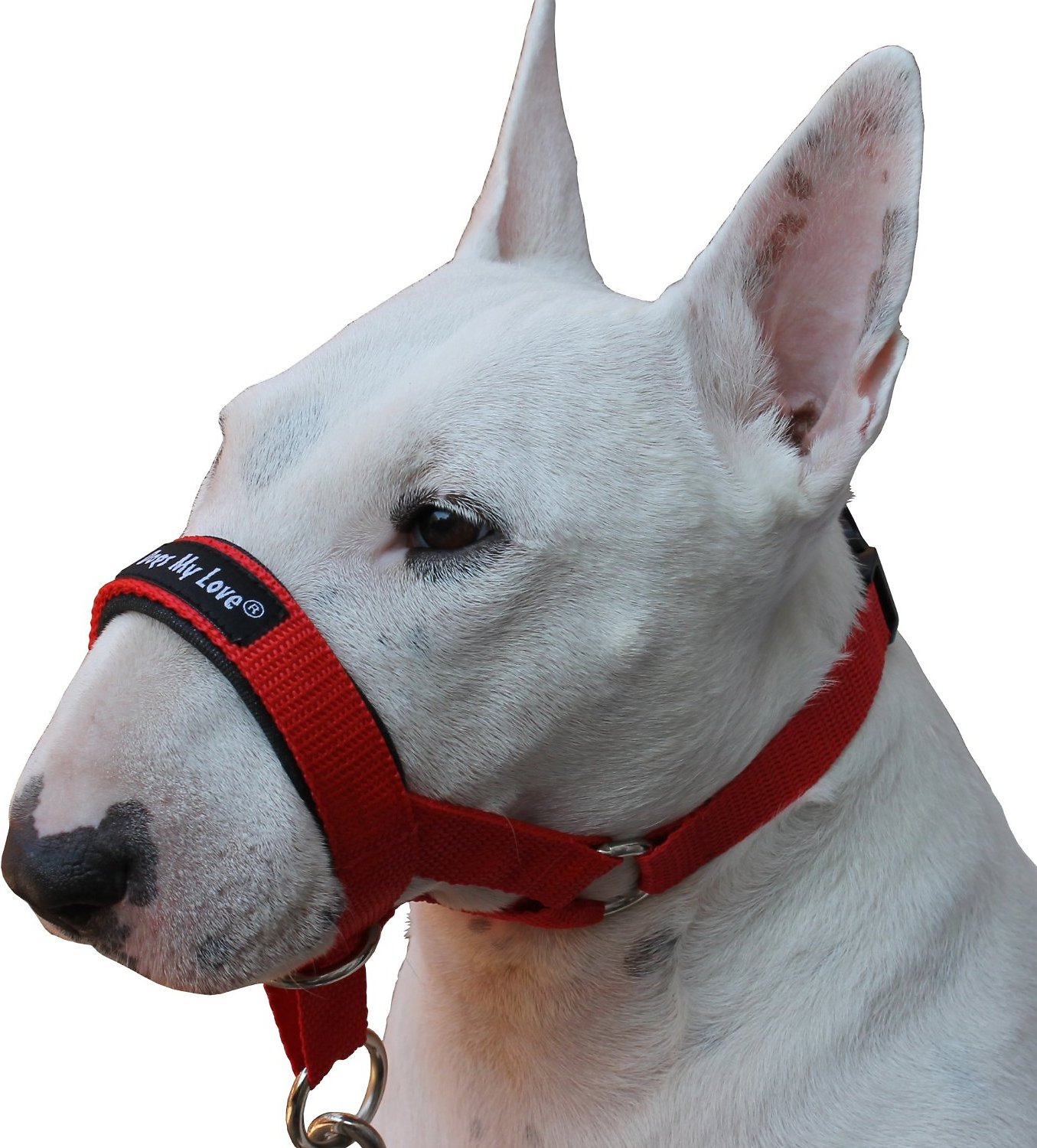 Dogs My Love Halter Dog Head Collar, Red, XX-Large - Chewy.com