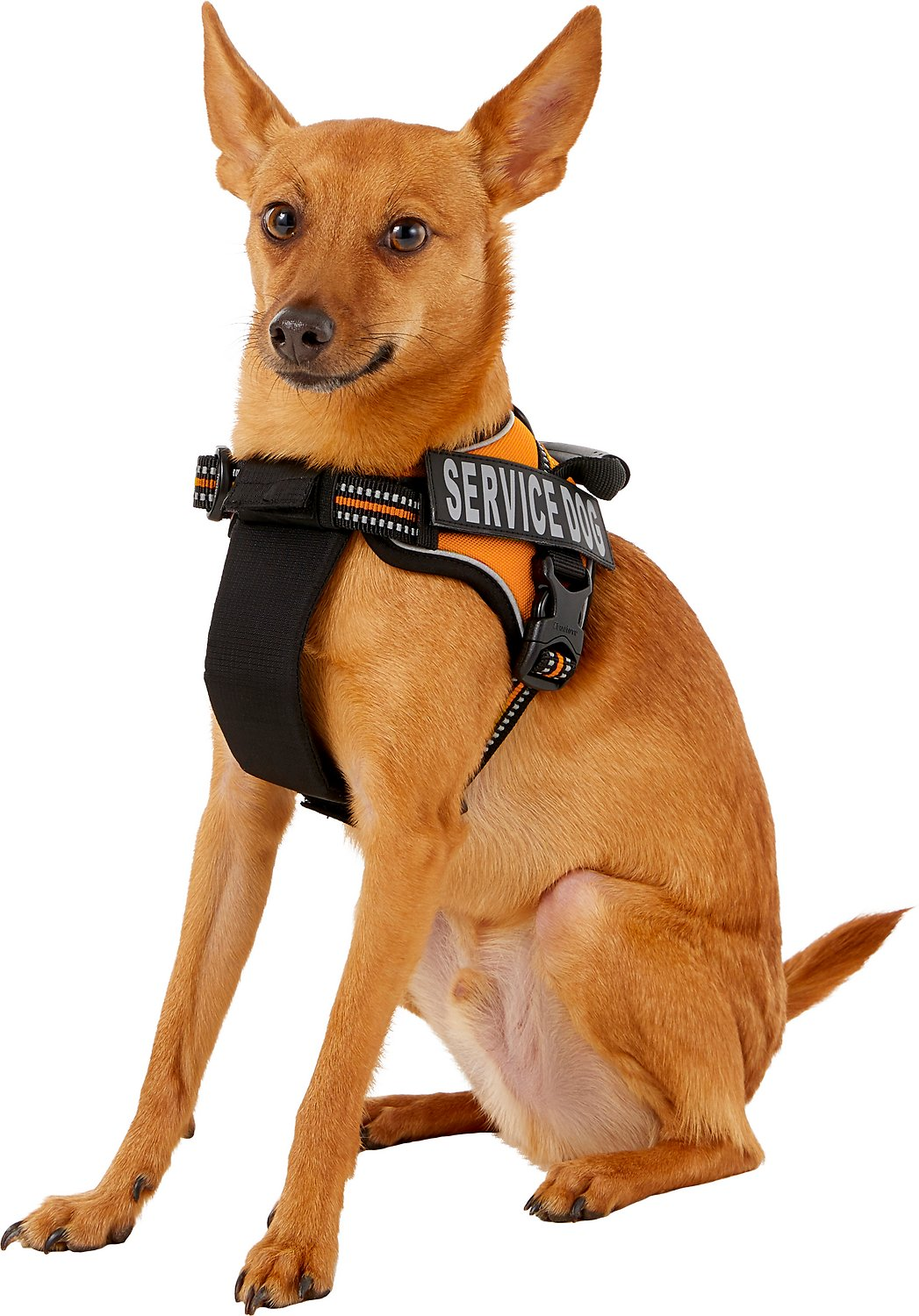 Chai S Choice Service Dog Harness Orange X Small 16 To 21 In Chest Chewy Com