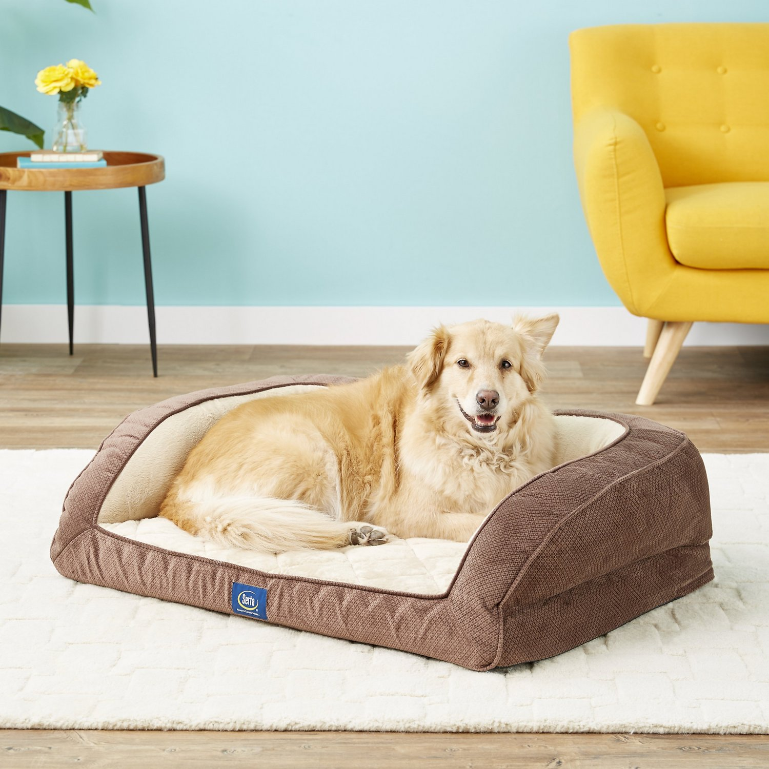 Serta Sleeper Sofa Dog Bed Review Home Decor
