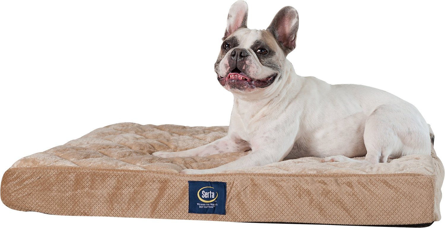 Serta Quilted Orthopedic Pillowtop Dog Bed W Removable Cover Tan Large Chewy Com