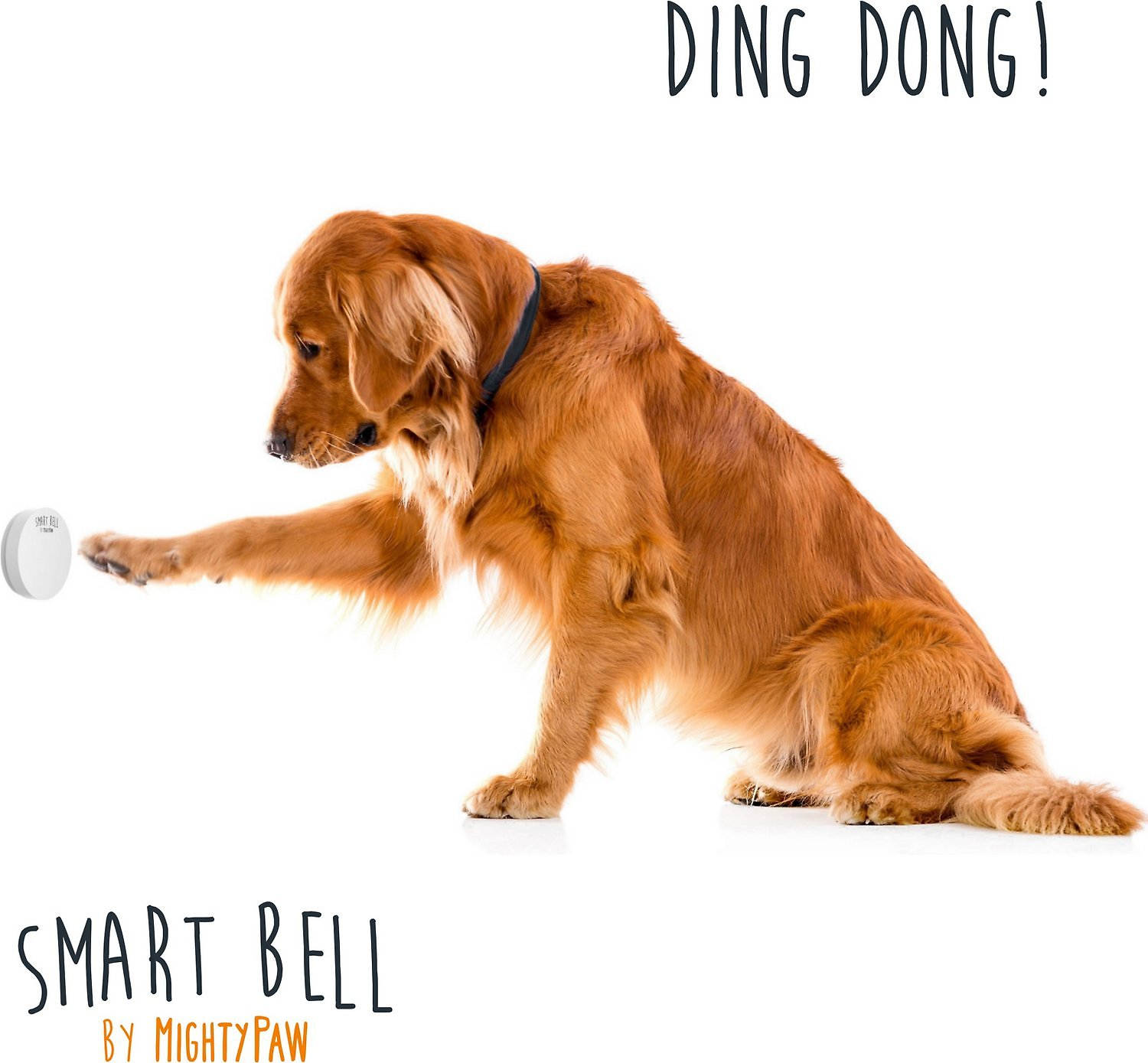 Mighty Paw Smart Bell 20 Potty Training Dog Doorbell White 1