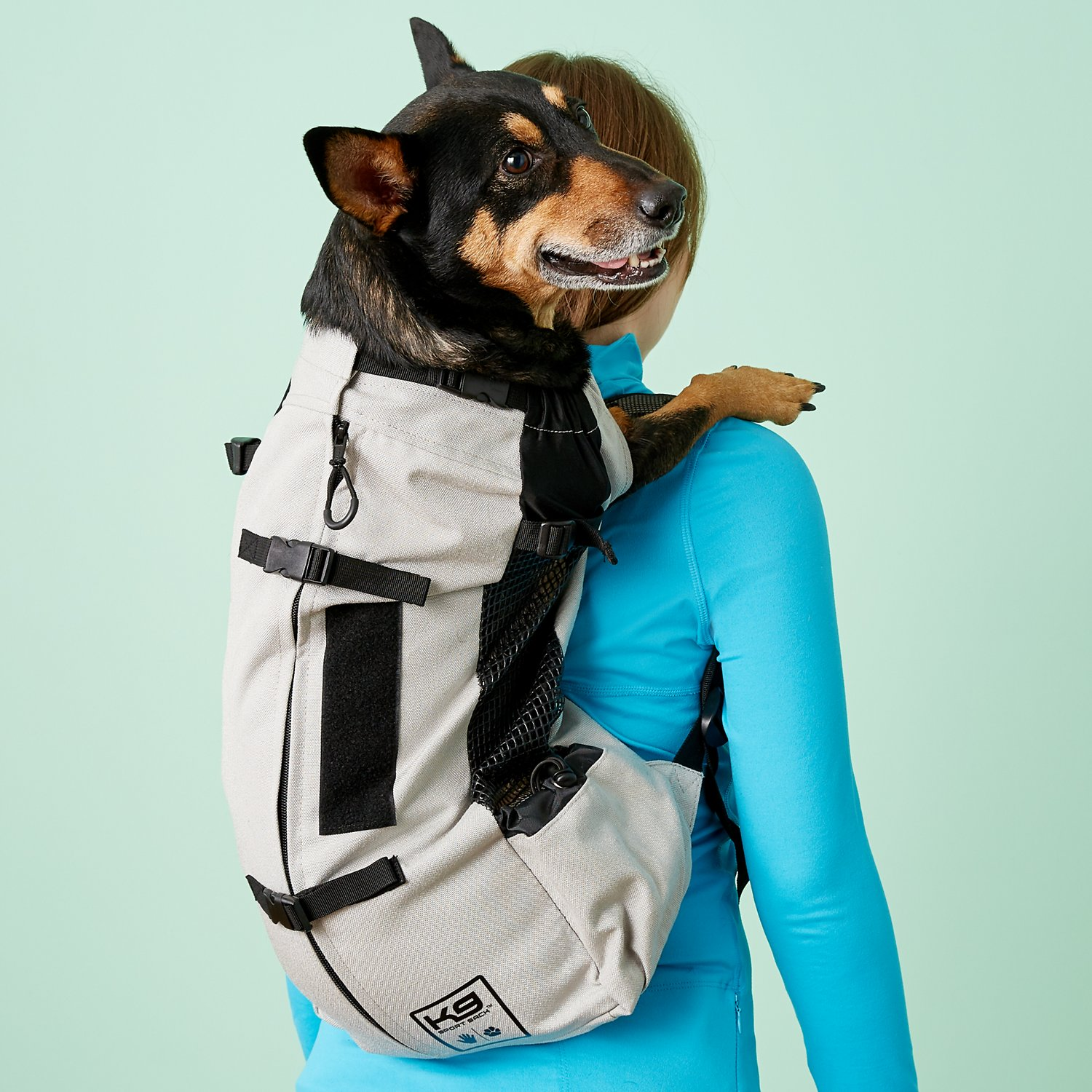 Air Travel With Small Dog