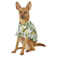 Frisco Hawaiian Camp Dog Shirt, Small