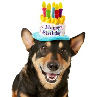 Frisco Birthday Cake Dog Hat, X-Small/Small