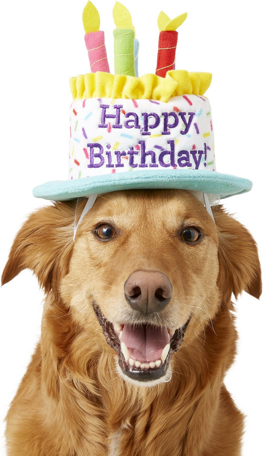 Frisco Birthday Cake Dog Hat